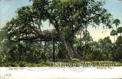 Big Tree - Daytona, Florida FL Postcard