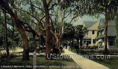 Crooked Branch Tree - Daytona, Florida FL Postcard