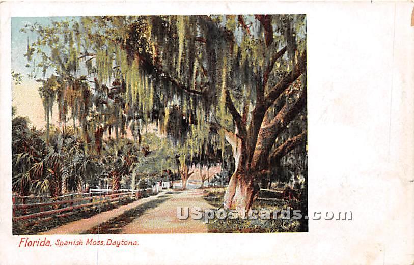 Spanish Moss - Daytona, Florida FL Postcard