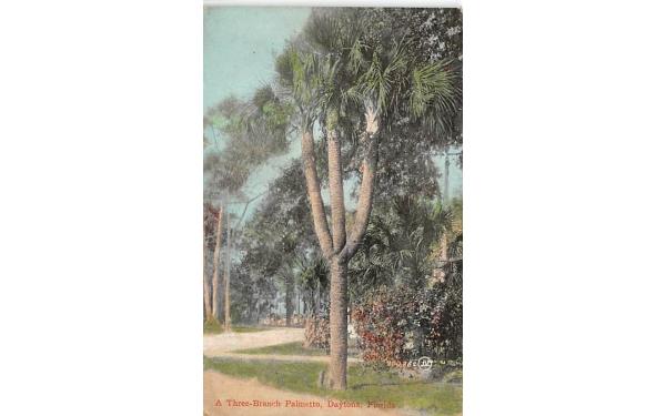 Three-Branch Palmetto Daytona, Florida Postcard