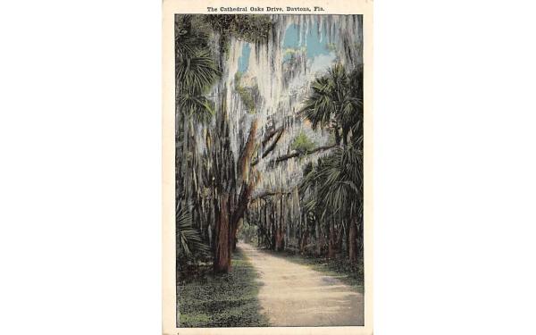 The Cathedral Oaks Drive Daytona, Florida Postcard