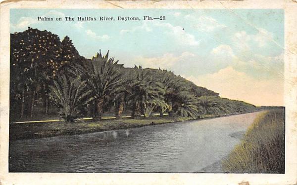 Palms on The Halifax River Daytona, Florida Postcard