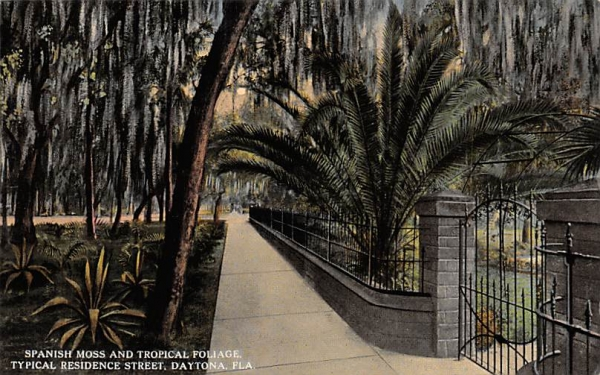 Spanish Moss and Tropical Foliage Daytona, Florida Postcard