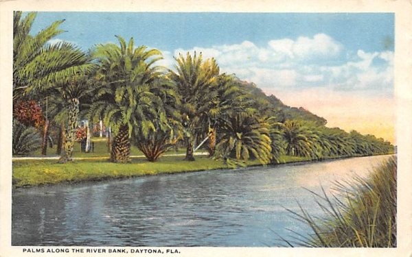 Palms Along the River Bank Daytona, Florida Postcard