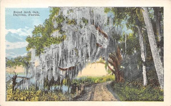 Royal Arch Oak Daytona, Florida Postcard