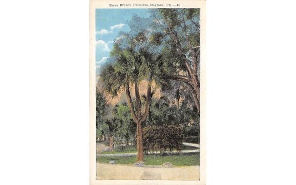 Three Branch Palmetto Daytona, Florida Postcard