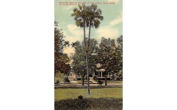 Branched Palm in Grounds of the College Arms Hotel De Land, Florida Postcard