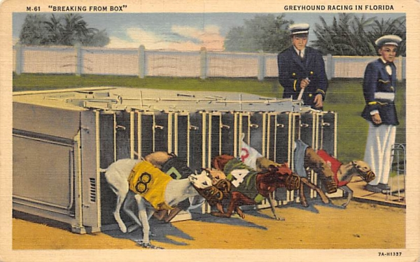 Breaking from Box, Greyhound Racing in FL, USA Dog Racing, Florida Postcard