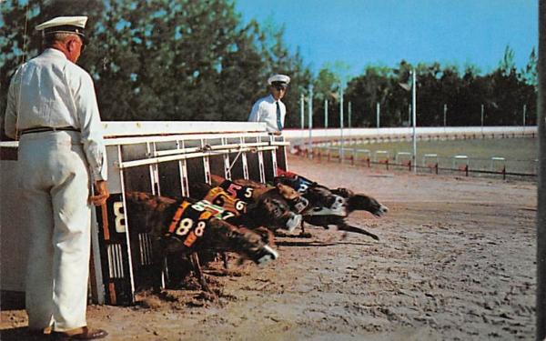 Greyhound Racing  Dog Racing, Florida Postcard