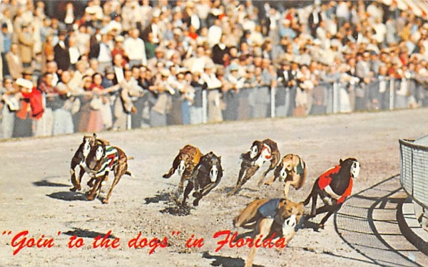 Goin' to the Dogs in Florida, USA Postcard