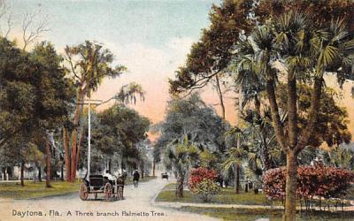 A Three branch Palmetto Tree Daytona, Florida Postcard
