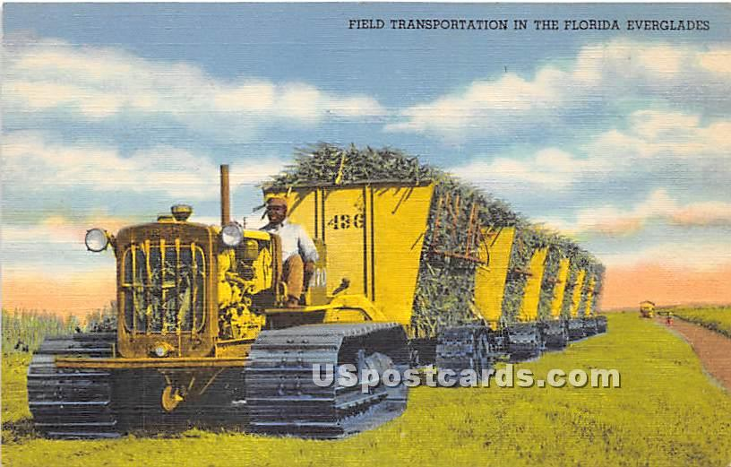 Field Transportation - Everglades, Florida FL Postcard
