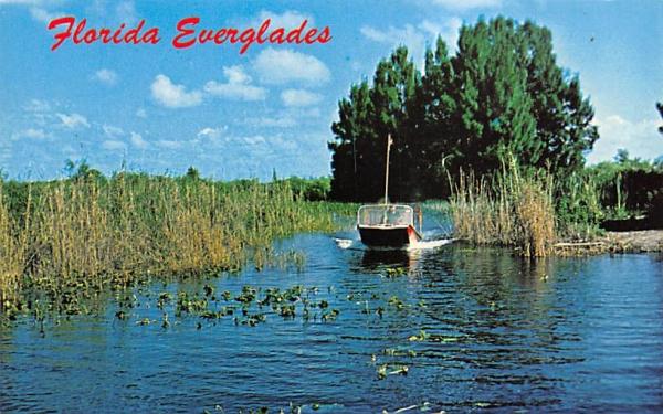 Air-boat rides through the Florida Everglades Postcard