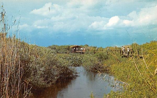 Scene in Everglades National Park Florida Postcard