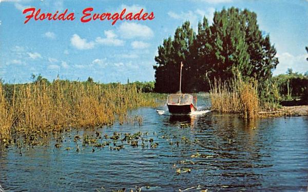 Air Boat Ride thru the Everglades Florida Postcard