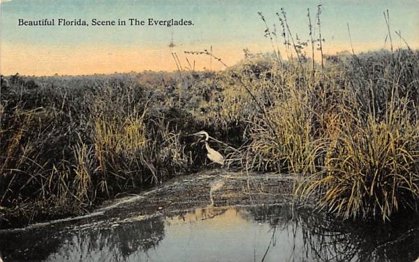 Beautiful Florida, Scene in The Everglades Postcard
