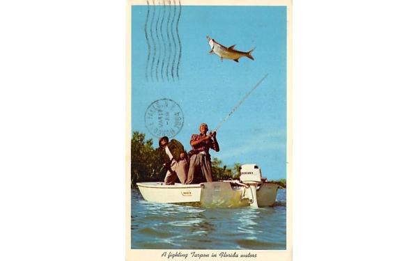 A fighting Tarpon in Florida waters Postcard