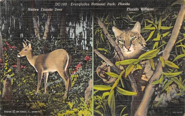 Everglades National Park Florida Postcard