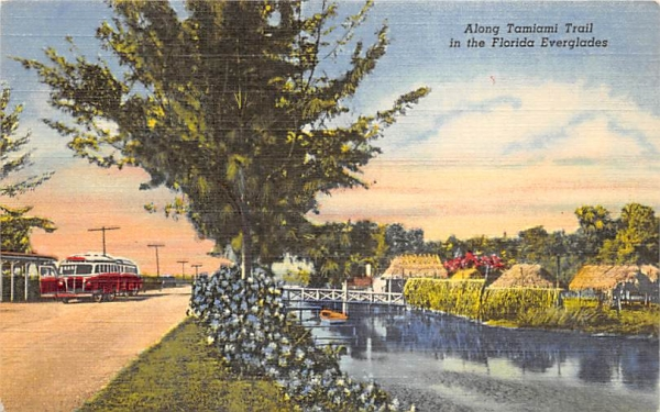 Along Tamiami Trail  Everglades, Florida Postcard