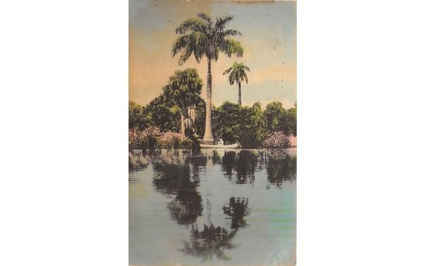 A Royal Palm along the River near Everglades, FL, USA Florida Postcard