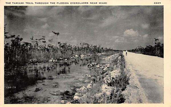 The Tamiami Trail through the Florida Everglades, USA  Postcard