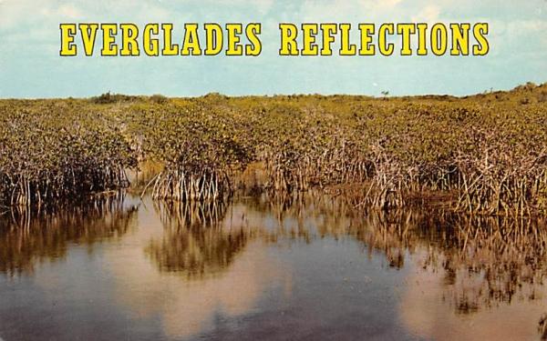 Everglades Reflections Florida Postcard