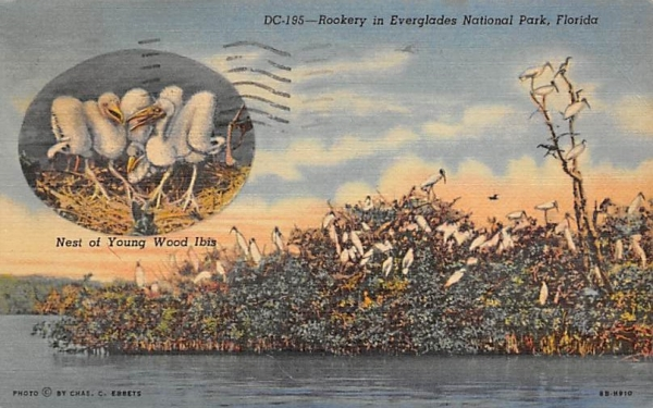 Rookery in Everglades National Park, FL, USA Florida Postcard