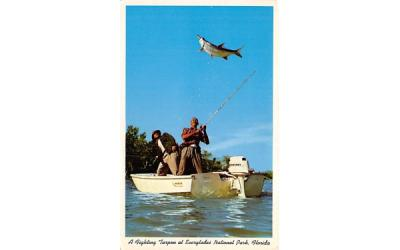 A Fighting Tarpon at Everglades Nation Park, FL, USA Everglades National Park, Florida Postcard