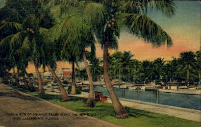 Coconut Palms - Fort Lauderdale, Florida FL Postcard