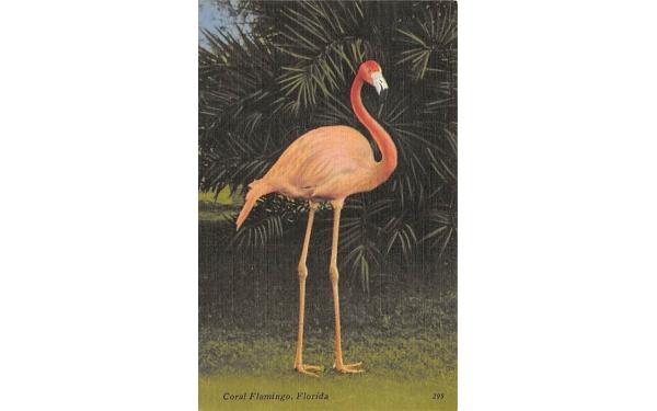Coral Flamingo Florida, USA Postcard