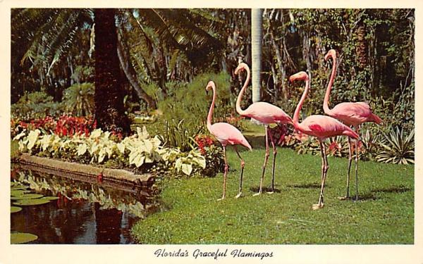 Florida's Graceful Flamingos Postcard