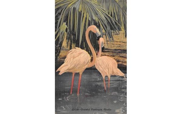 Graceful Flamingos, FL, USA Florida Postcard