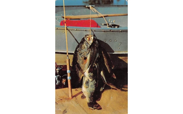 Large Mouth Bass, Florida's Fresh-Water Lakes Postcard