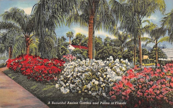 A Beautiful Azalea Garden and Palms in Florida, USA Postcard
