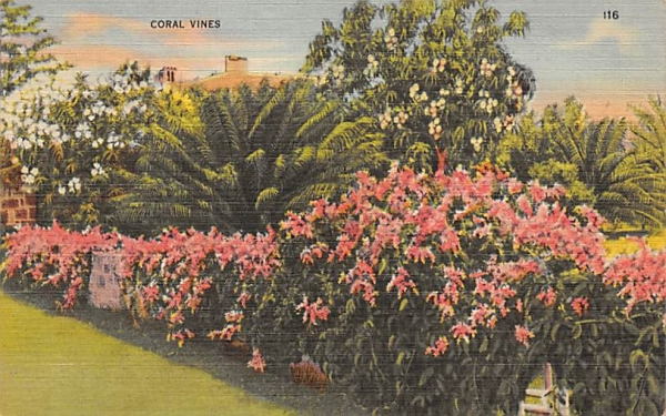 Coral Vines Flowers, Florida Postcard