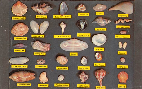 Shell Chart Greetings From, Florida Postcard