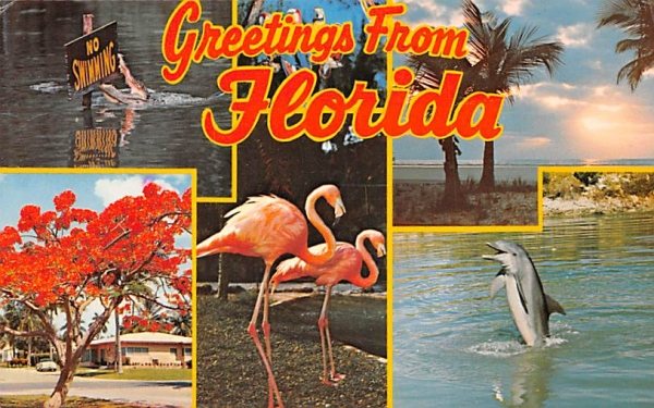 Greetings from Florida, USA Postcard