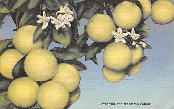 Grapefruit and Blossoms Grapefruit Groves, Florida Postcard