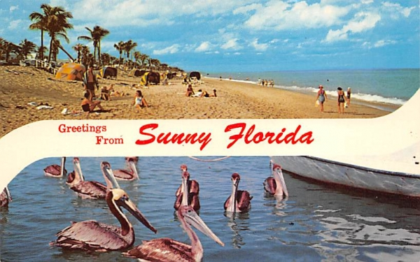 Greetings from Sunny Florida, USA Postcard