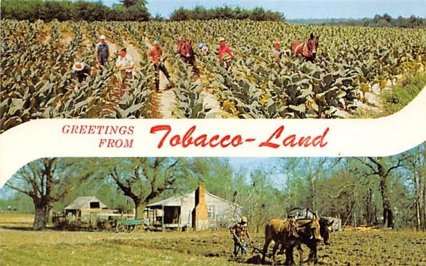 Greetings from Tobacco-Land, FL, USA Florida Postcard