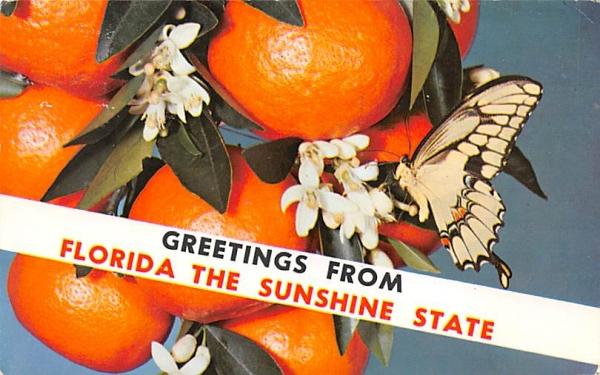 Greetings from Florida the Sunshine State, USA Postcard