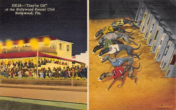 They're Off at the Hollywood Kennel Club Florida Postcard