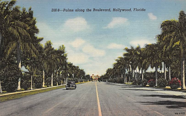 Palms along the Boulevard Hollywood, Florida Postcard