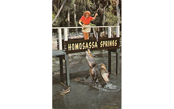 Gator Lagoon at Homosassa Springs Florida Postcard
