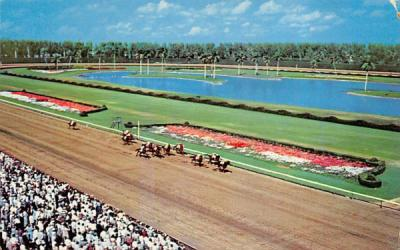 A Thrilling Race at Hialeah Race Course Florida Postcard