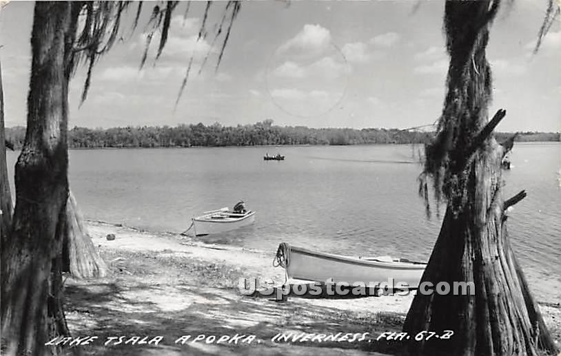 Lake Tsala Apopka - Inverness, Florida FL Postcard