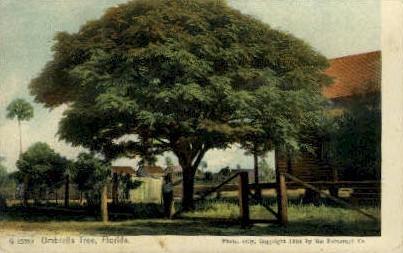 Umbrella Tree - Jacksonville, Florida FL Postcard