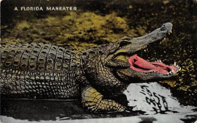 A Florida Maneater Postcard