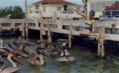 Pelicans - Key West, Florida FL Postcard