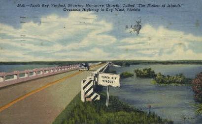 Mangrove Growth - Key West, Florida FL Postcard
